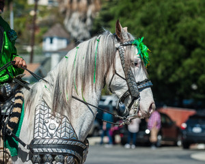 Elegant costume white horse head in St Patrick's Day parade.