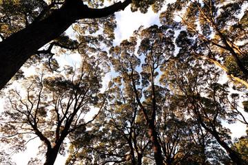 緑の葉を付けた木々