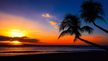 Wall Mural - blue and orange sunset