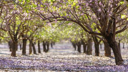 garden with flowering fruit trees