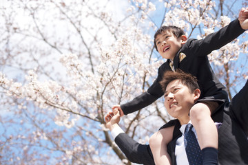 Father carrying son on shoulders and cherry blossoms