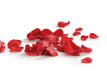 red rose petals on white background, abstract photo