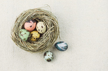 Small easter eggs in nest with feather. easter theme.