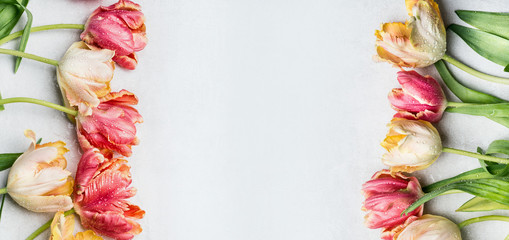 Springtime floral border mit colorful tulips, floral banner, top view. Spring flowers concept