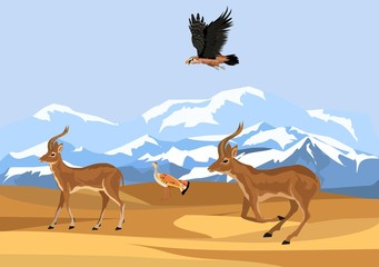 Asian antilope's jairan in desert vector illustration