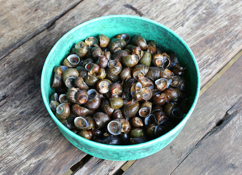 Periwinkle raw for curry, thai food.