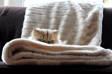 Kitten up close