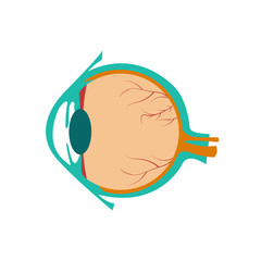 Vector illustration of human eye.