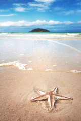 A lone starfish on the gorgeous tropical shore of whitehaven beach, Australia