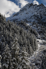 Fresh snow in Swiss mountains on fir trees early in the morning