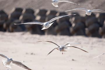 海をかすめ飛ぶカモメ