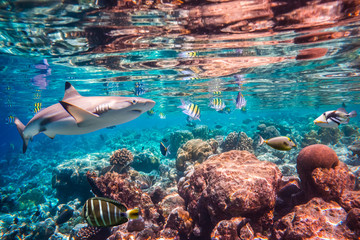 Foto op Canvas Onder water Tropical Coral Reef.