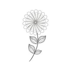 camomile flower decoration line vector illustration eps 10