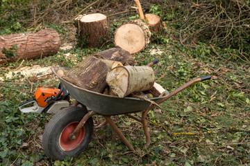 Schubkarre mit Holz Brennholz