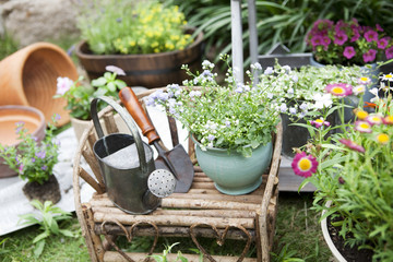 Potted flowers and gardening equipments