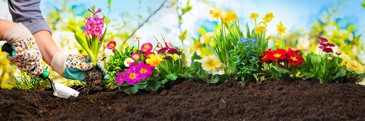 Foto op Canvas Tuin Planting flowers in a garden