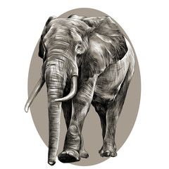 elephant in full growth, moving forward, sketch graphics vector black and white pattern on the grey oval circle
