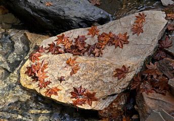 Autumn leaves on a rock in the middle of the stream