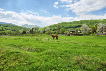 Brown horse on pasture. Carpathian mountains. Summer