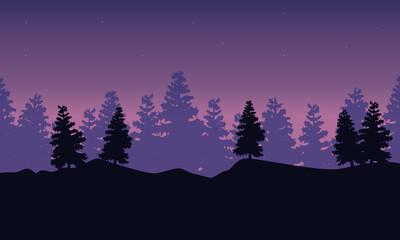 Silhouette of spruce scenery at night