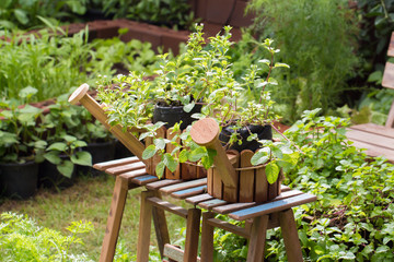 home-grown vegetable pots in garden