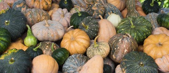 Variety pumpkins