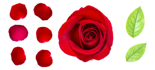 Red rose petals and rose leaf isolated on white