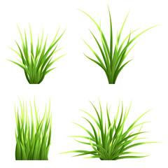 Fototapeta Set realistic vector  grass. Bush of fresh grass of various shapes. Isolated element for design, nature landscape illustration. obraz