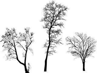 small three bare isolated tree black silhouettes