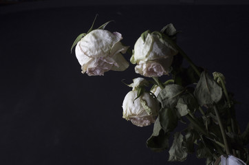 Dried bouquet of roses on a dark background