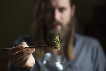 Close up of man holding cannabis bud with chopsticks