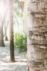 Close up of Palm tree