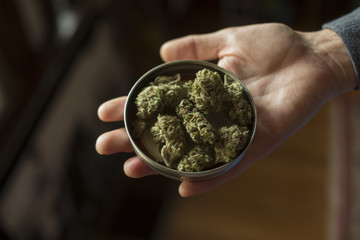 Close up of woman's hand holding cannabis strains in jar lid
