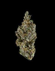 Cannabis Flowers: Girl Scout Choco CSF
