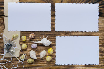 theme for photos, surrounded by shells