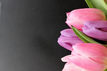 flower, flowers, tulip, bouquet, pink, purple, spring time, spring, spring flowers, easter time, lovely time, candle,  romantic time, romantic moments, lovely time, valentines, Enjoy the little things