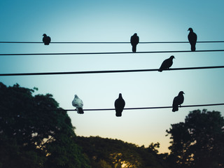 Silhouette of a pigeons sitting on pillar electric line in the morning light