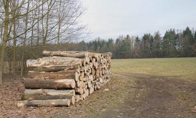 Forstwirtschaft - Baumstämme liegen nach der Fällung im Frühjahr zur Abholung bereit