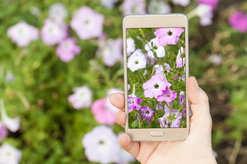 Woman's hand holding smartphone, taking pictures of  flowers