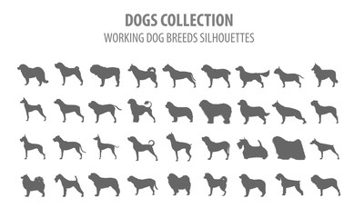 Working (watching) dog breeds collection isolated on white. Flat style