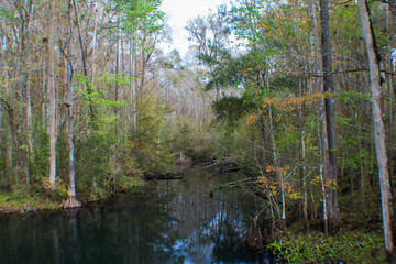 Creek flowing through to Crystal Springs in Pasco County Florida