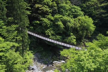 Momiki Suspension Bridge at Gokasho