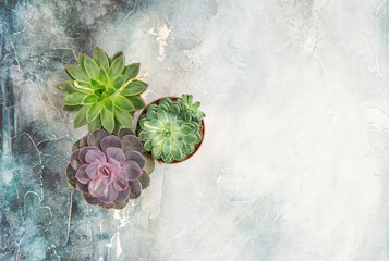 Floral flat lay Succulent plants stone background