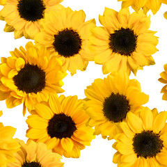 Seamless pattern with photos of shiny yellow sunflowers on white