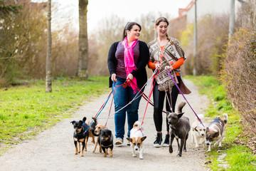 Hundeausführer oder dog sitter gehen Gassi auf Spaziergang mit ihren Kunden