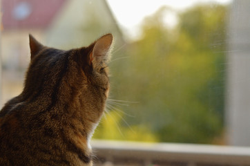 Cat looking out the window, back view