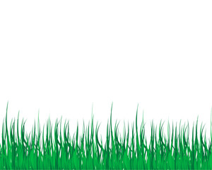 grass illustrator vector white background