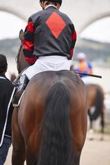 Race horse with jockey ready to run. Paddock area.