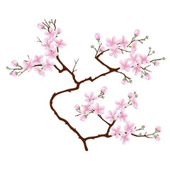 Vertical  branch of cherry blossoms. Realistic vector illustration on isolated background.