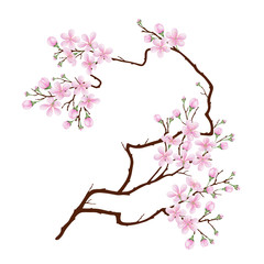 Vertical curved branch of cherry blossoms. Realistic vector illustration on isolated background.